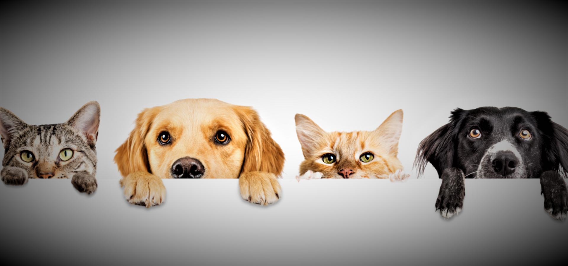 Kedi ve Köpekler için Probiyotik